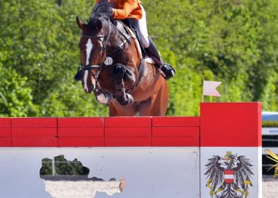 FELLINI-S (VERMONT X RASH R) Jumping international 1.60 wit Erynn Ballard